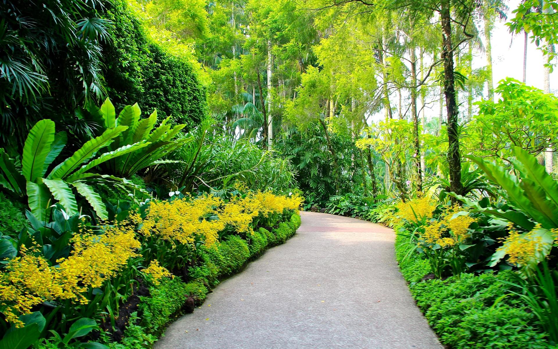 Картинки Сингапур, ботанические сады, пешеходные дорожки, деревья фото и обои на рабочий стол