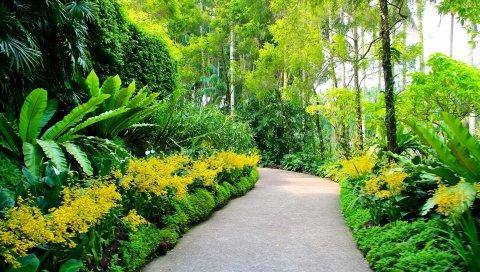 Сингапур, ботанические сады, пешеходные дорожки, деревья