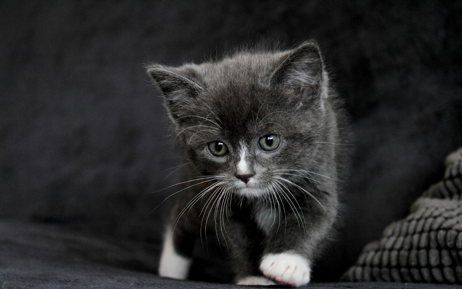картинки с серыми кошками на рабочий стол страница