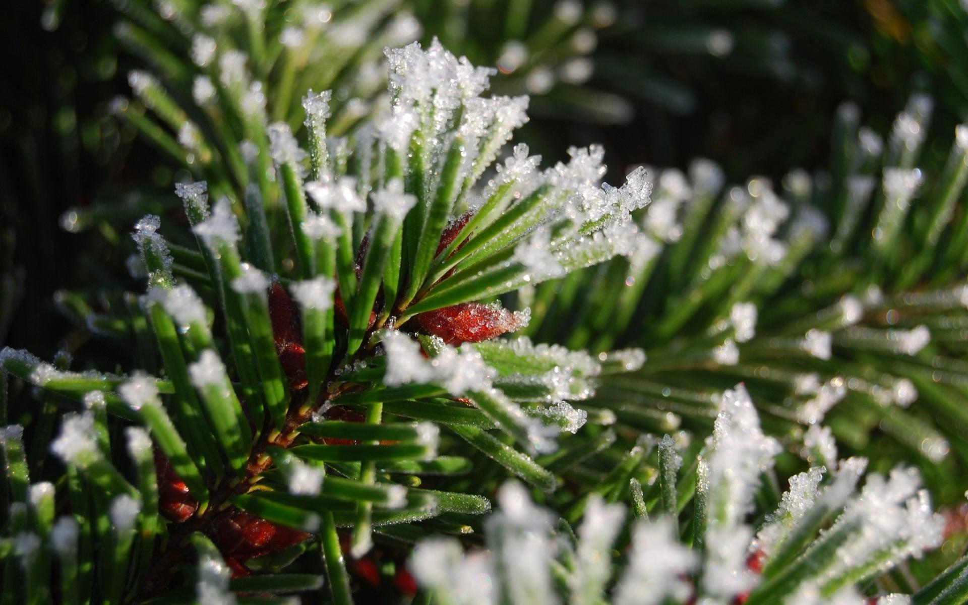 первой картинки на рабочий стол снег на елках тренировал несколько
