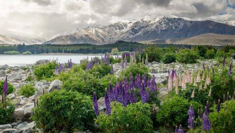 Новая Зеландия, горы, цветы, озеро