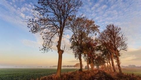 Осень, тропа, деревья, небо