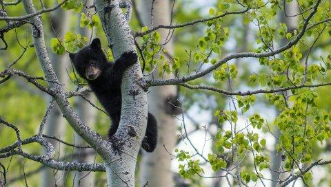 Медведь, куб, дерево