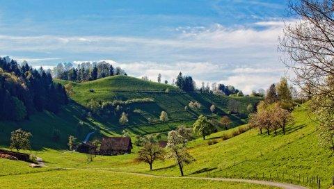 Холмы, пейзаж, деревья, трава