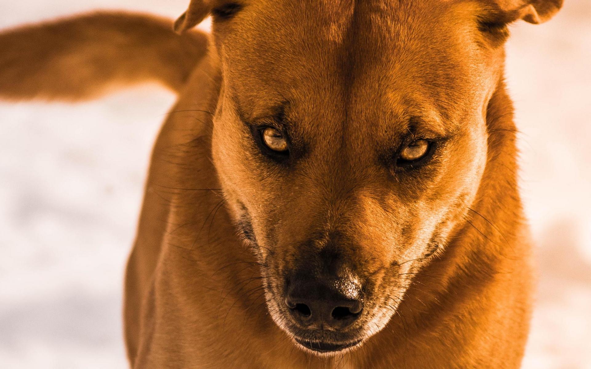 картинки злий собака