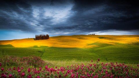 Поле, трава, цветы, поле, небо