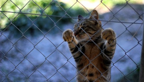 кот, забор, стоя, ноги