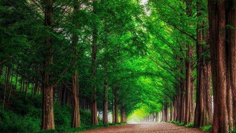 Лес, дорога, деревья, пейзаж, лето