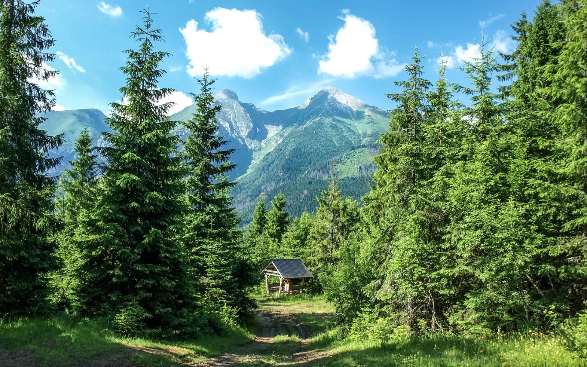 гора ели деревья дом mountain ate trees the house загрузить