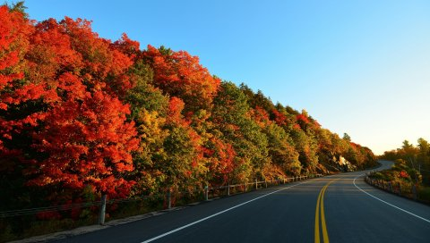 осень, дорога, поворот, деревья, маркировка
