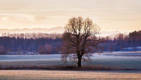 Дерево, трава, небо, мороз, зима