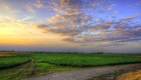 Трава, поле, небо, лето