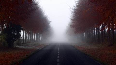 Дорога, вывески, деревья, туман