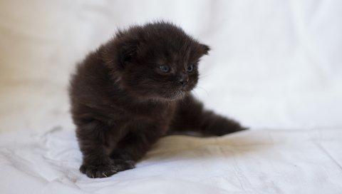 Котенок, пушистый, взгляд, малыш