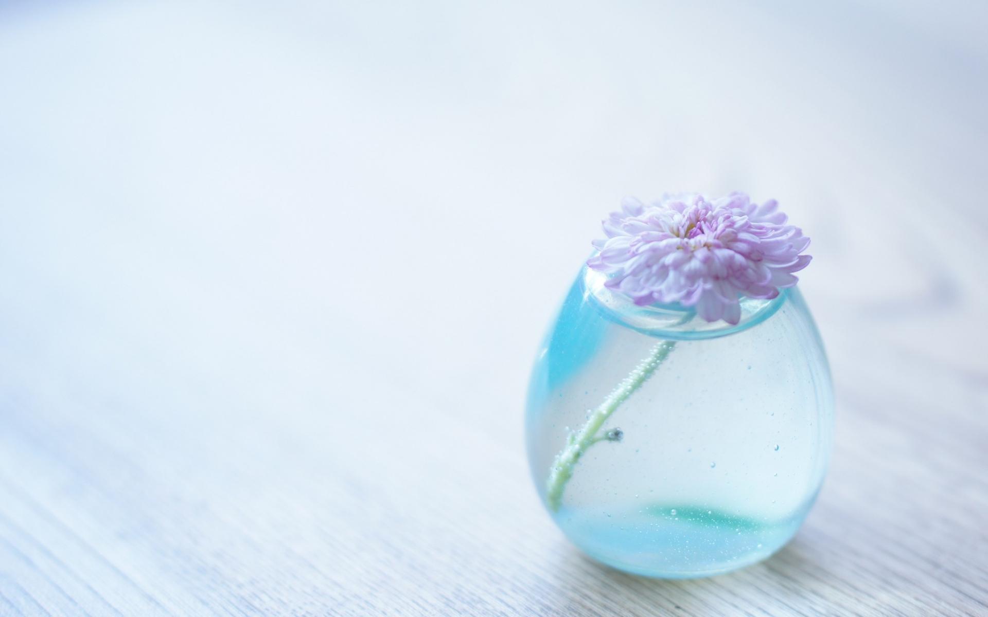 природа цветы ваза  № 1734209 без смс