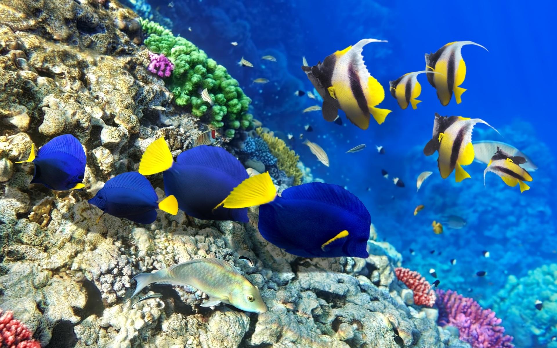Картинки Рыба, водоросли, кораллы, подводные фото и обои на рабочий стол