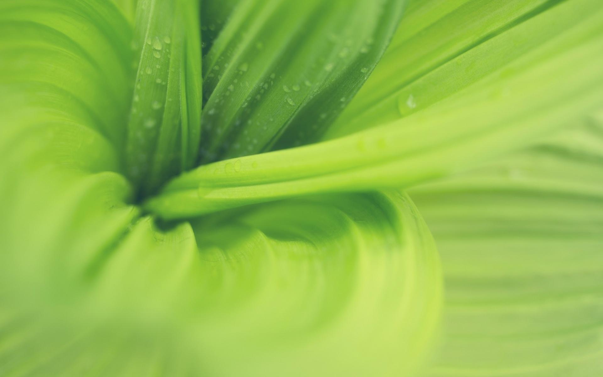 Картинки листья, макро, растение фото и обои на рабочий стол