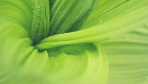 листья, макро, растение