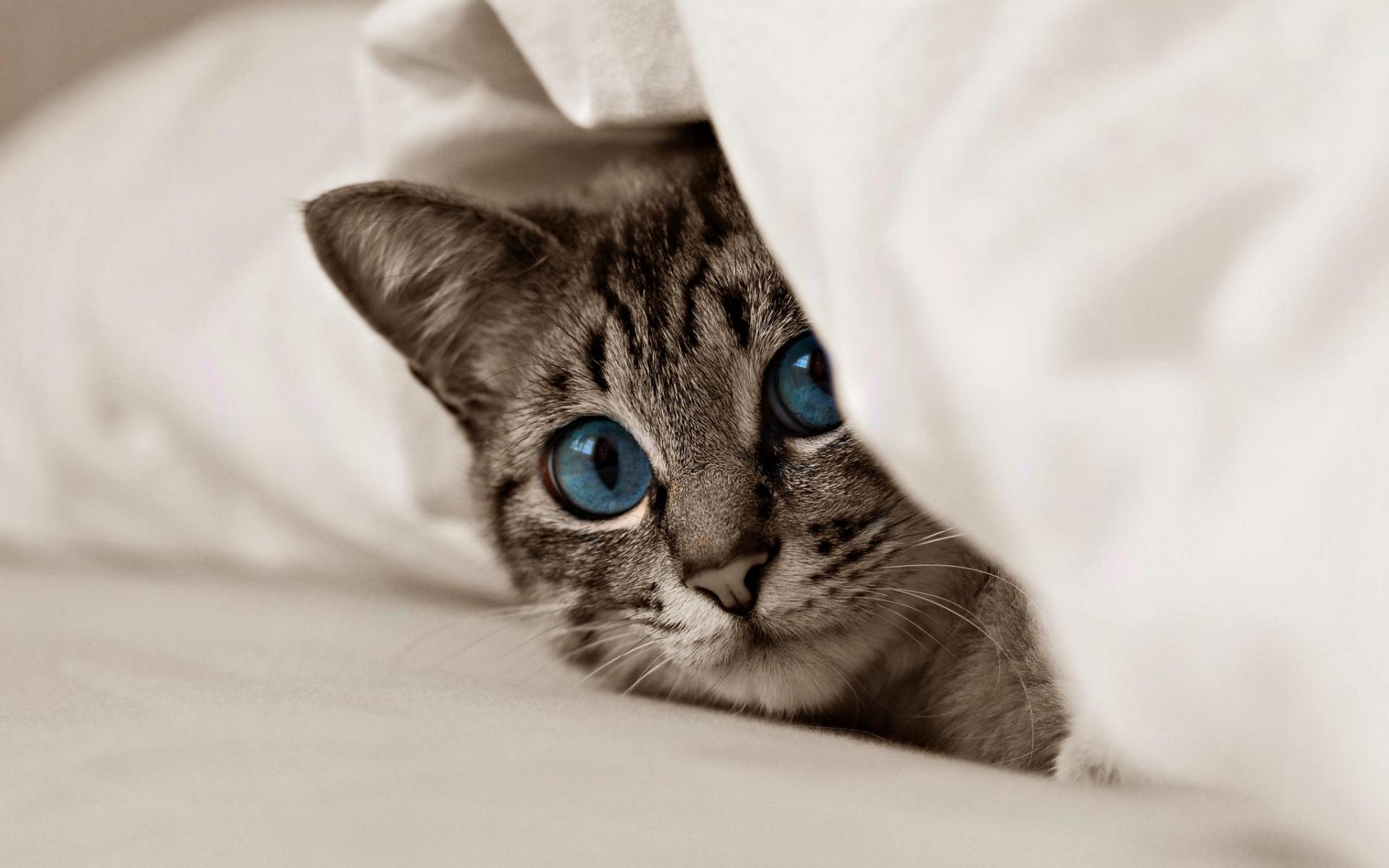 Кошки обои и картинки на рабочий лайнере