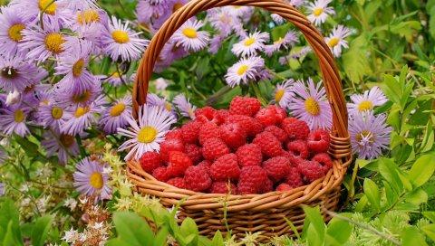 малина, ягоды, корзины, цветы