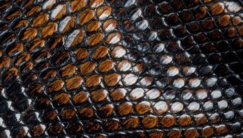 кожа, змея, поверхность, ребристые