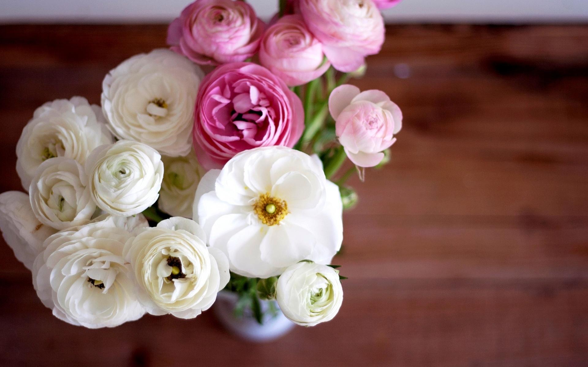картинки на рабочий стол цветы лютики запросу купить