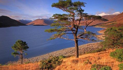 скала, дерево, осень, трава, озеро