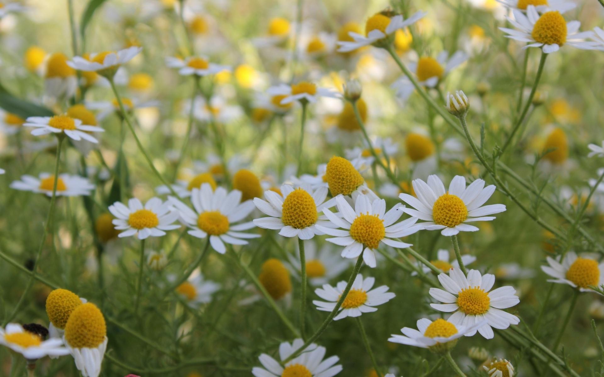 фотообои на рабочий стол лето цветы будет отбывать