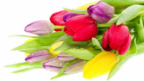 праздника, женщины, тюльпаны, цветок, желтая, красная, фиолетовая