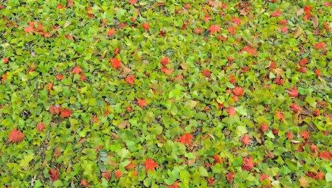 листья, зелень, трава, осень