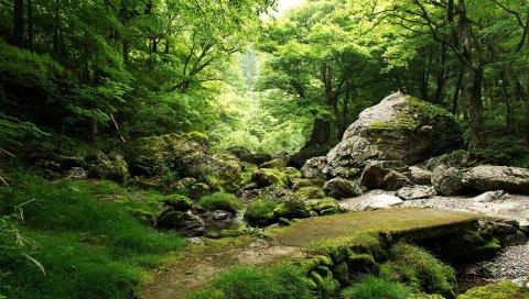 камни, трава, мох, природа, деревья ,