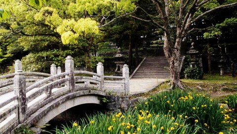 моста, трава, парк, цветы