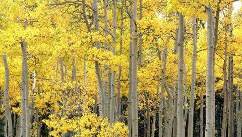 деревья, стволы, осень