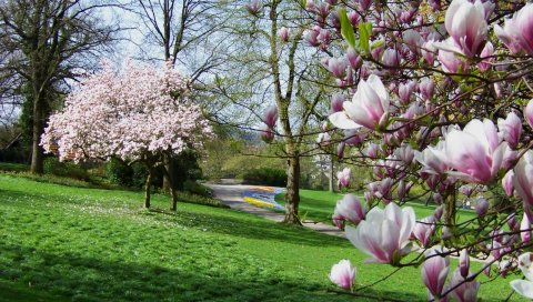 деревья, парк, цветы, трава