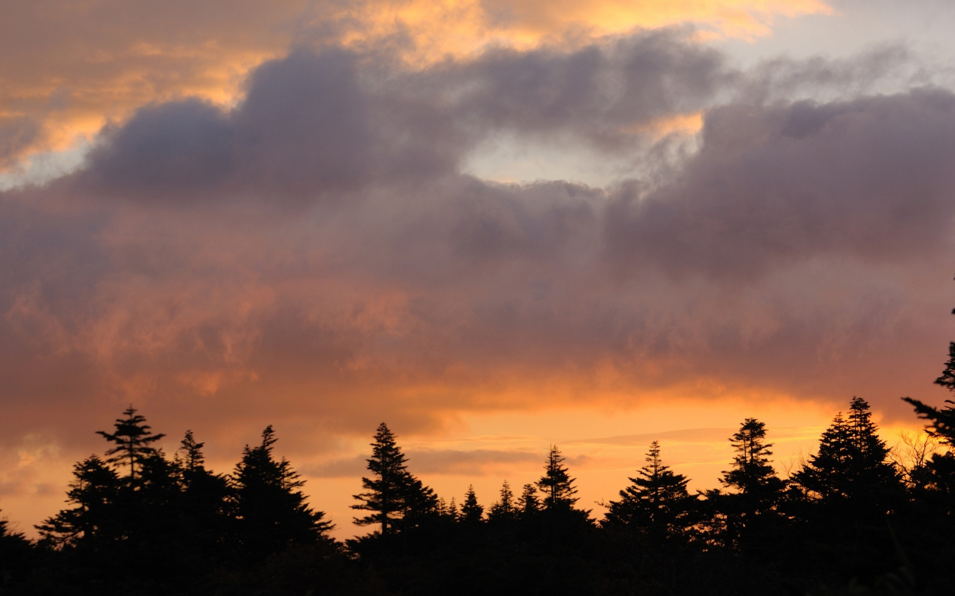Картинки деревья, небо, закат, облака фото и обои на рабочий стол