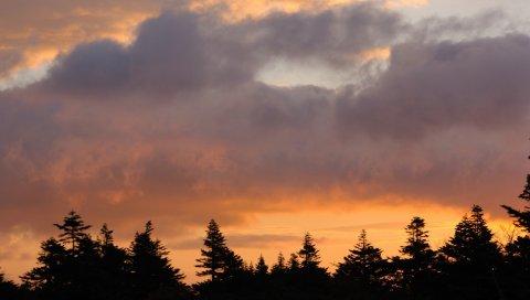 деревья, небо, закат, облака