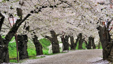 цветы, деревья, дороги