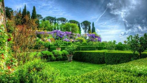 сад, кустарники, цветы, деревья, ВСД
