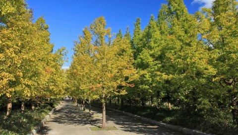 деревья, осень, Роуд