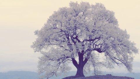 дерево, мороз, туман, река