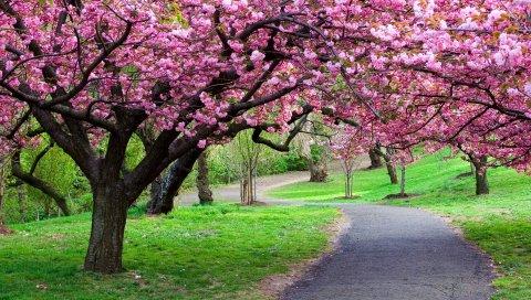 дороги, тропа, деревья, цветы