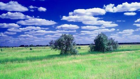 лето, поле, трава, деревья, облака, небо