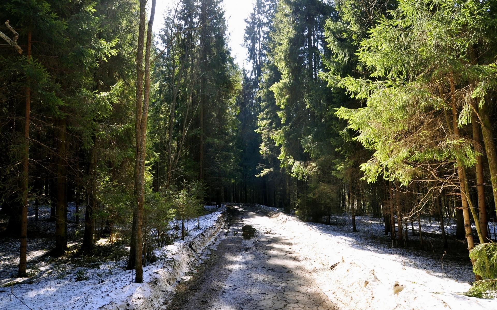 Картинки лес, дорога, трава, грязь, снег фото и обои на рабочий стол