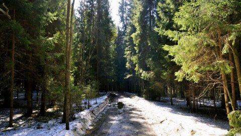 лес, дорога, трава, грязь, снег