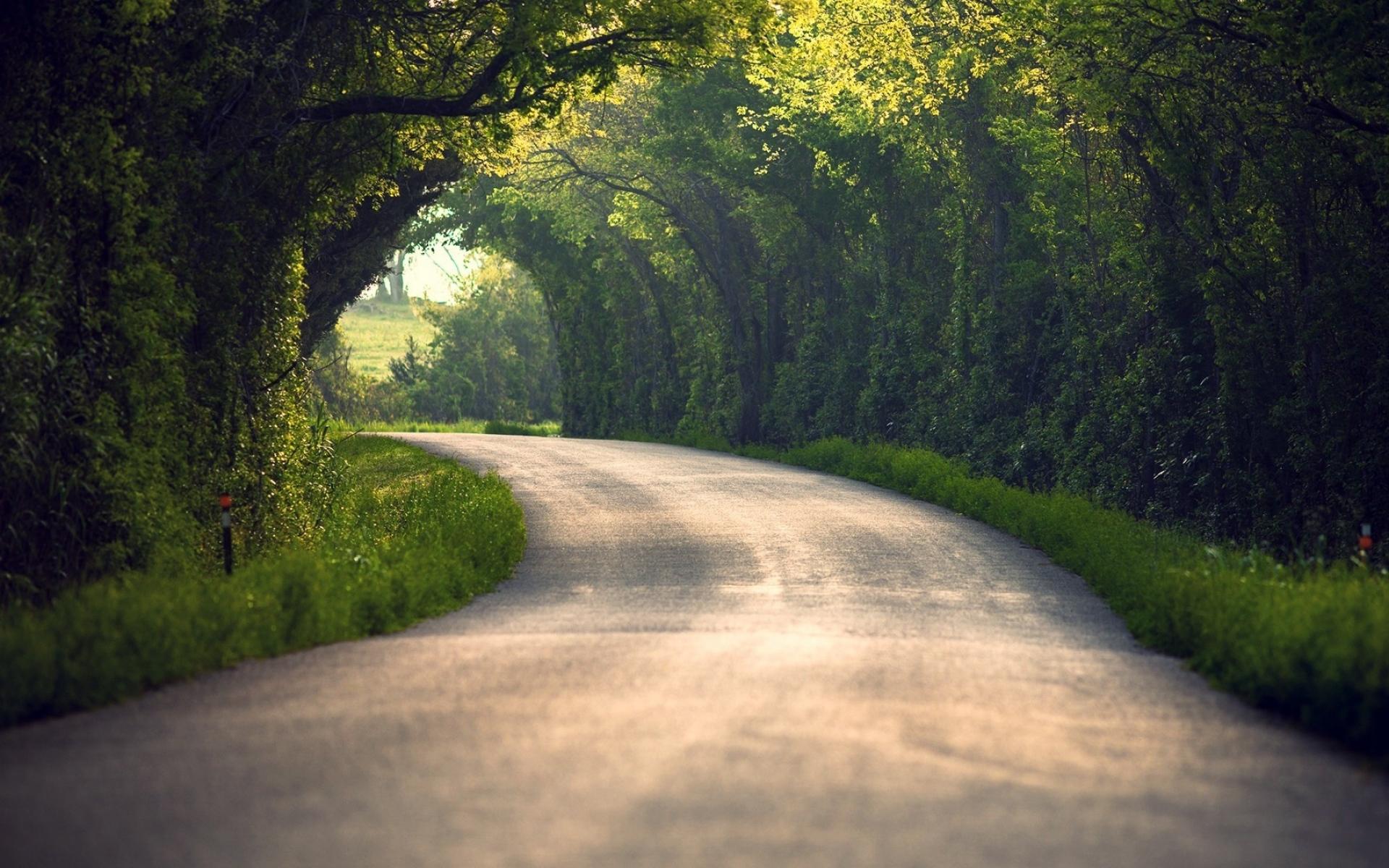 Картинки лето, природа, дорога, листы,деревья фото и обои на рабочий стол