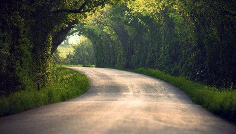 лето, природа, дорога, листы,деревья