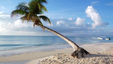 Maldives, тропические, пляж, пальмы