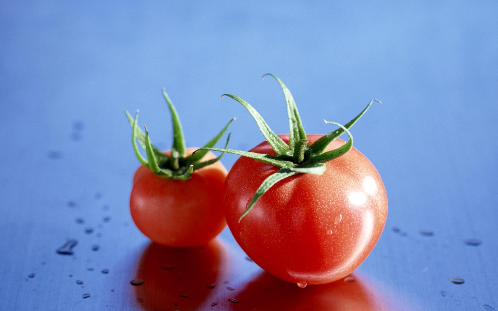 картинки помидоров растение для рабочего стола может применяться криминалистике