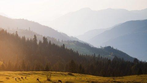 горы, деревья, небо, туман