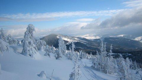 снег, Карпатские горы, горы Стиг, деревья, Украина, зима, Свидовец, Раховский район